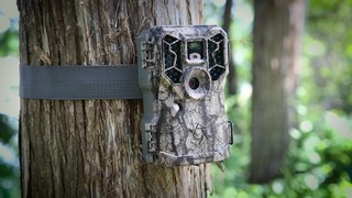 Stealth Cam PX36NGCMO Trail/Game Camera, 10MP - 662747, Game ...