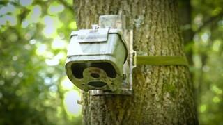 Eyecon Crossfire 7MP Invisi-Flash Trail/Game Camera, Camo - 663974 ...