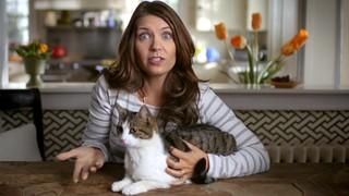 Blue Buffalo Blue Multi-Cat Health Adult Chicken & Turkey Recipe Dry Cat Food, 15 lbs. - Thumbnail-9