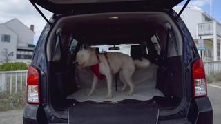 Kurgo Heather Hammock Tan Dog Car Seat Cover - Thumbnail-7