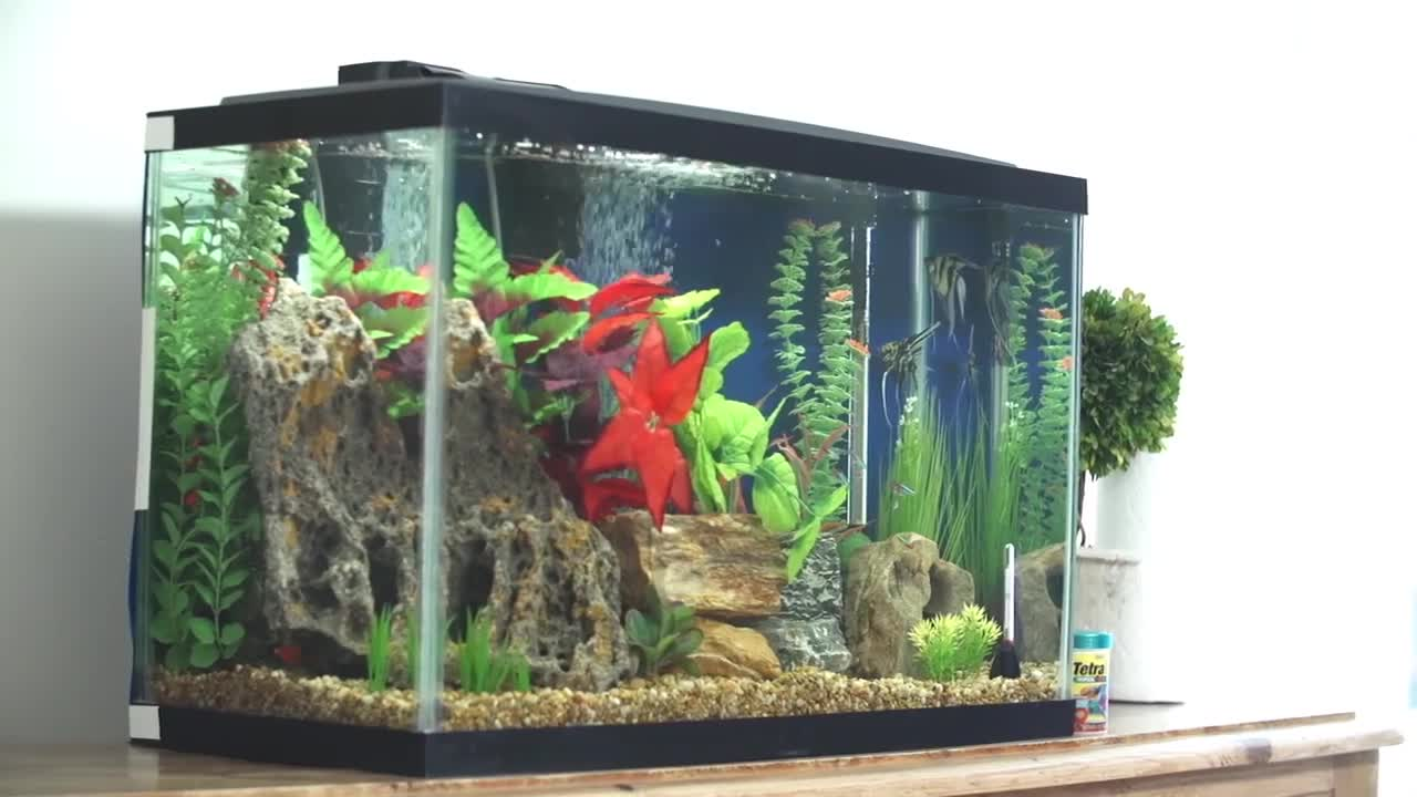 Fish aquariums near me family fun at north aquariums for Pet stores with fish near me