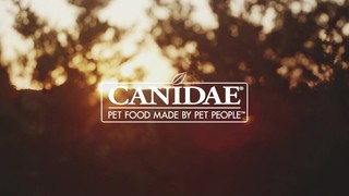 CANIDAE PURE Real Wild Boar & Garbanzo Bean, Limited Ingredient, Grain Free Recipe Dry Dog Food, 24 lbs. - Thumbnail-8