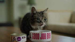 halo grain free kitten holistic chicken chicken liver dry cat food