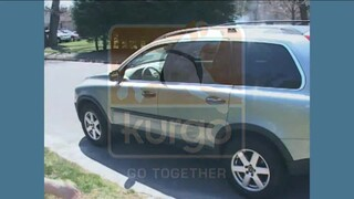 Kurgo Black Tru Fit Dual Walking Harness & Seat Belt Harness - Thumbnail-5