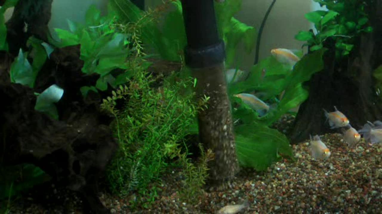 Aqueon Aquarium Water Changer - Tankless Water Heater