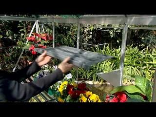 Palram Harmony 6 x 8 Greenhouse with Starter Kit » Welcome to Costco on pretty wildlife, pretty barn, pretty water, pretty spring, pretty lawn, pretty green, pretty forest, pretty roses, pretty porch, pretty house, pretty church, pretty shed,